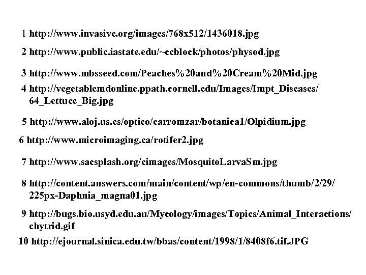 1 http: //www. invasive. org/images/768 x 512/1436018. jpg 2 http: //www. public. iastate. edu/~ccblock/photos/physod.