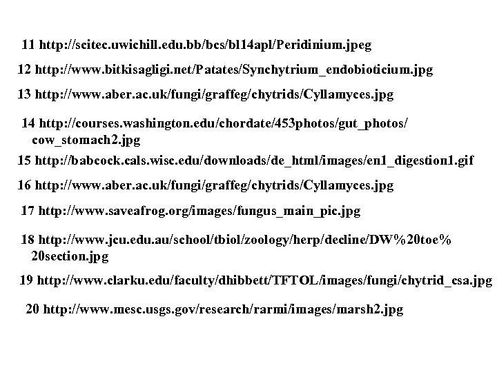 11 http: //scitec. uwichill. edu. bb/bcs/bl 14 apl/Peridinium. jpeg 12 http: //www. bitkisagligi. net/Patates/Synchytrium_endobioticium.