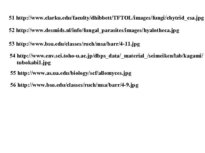 51 http: //www. clarku. edu/faculty/dhibbett/TFTOL/images/fungi/chytrid_csa. jpg 52 http: //www. desmids. nl/info/fungal_parasites/images/hyalotheca. jpg 53 http: