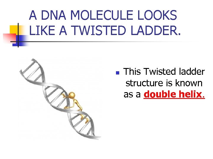 A DNA MOLECULE LOOKS LIKE A TWISTED LADDER. n This Twisted ladder structure is