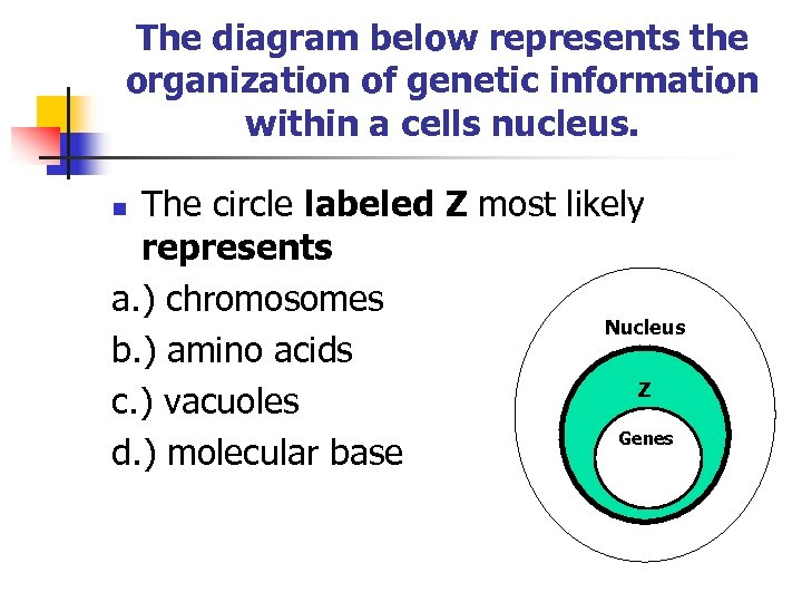 The diagram below represents the organization of genetic information within a cells nucleus. The