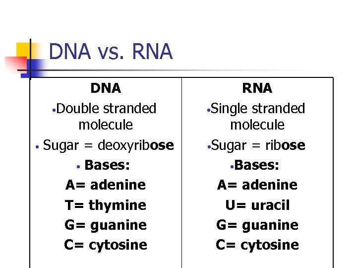 DNA vs. RNA DNA • Double stranded molecule • Sugar = deoxyribose • Bases:
