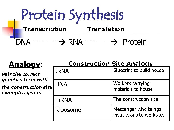 Protein Synthesis Transcription Translation DNA ----- RNA ----- Protein Analogy: Pair the correct genetics