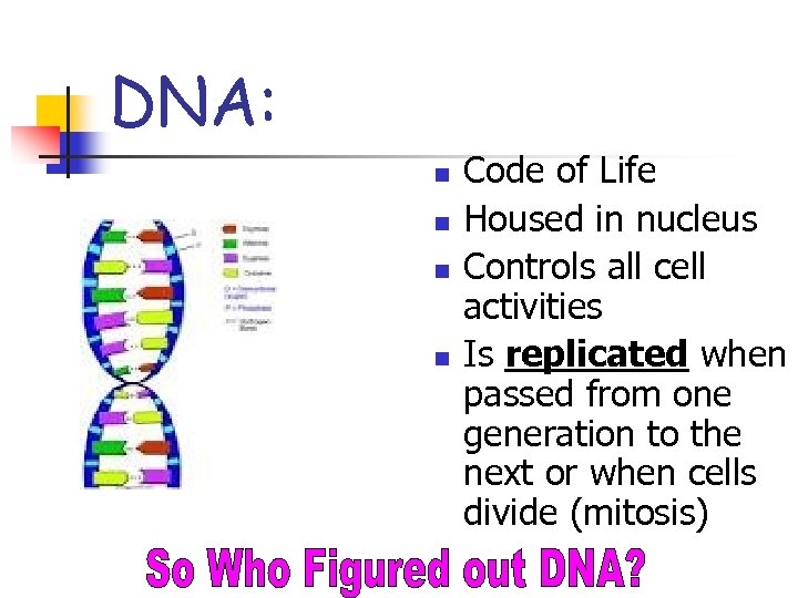 DNA: n n Code of Life Housed in nucleus Controls all cell activities Is