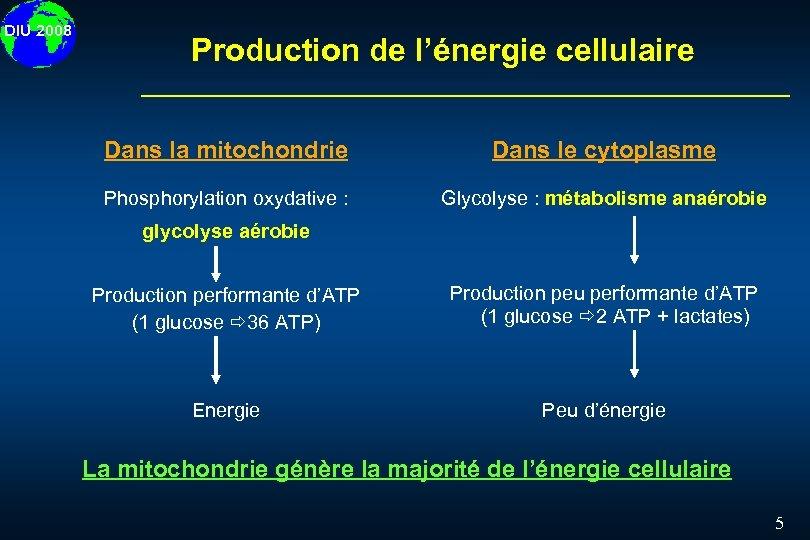 DIU 2008 Production de l'énergie cellulaire Dans la mitochondrie Dans le cytoplasme Phosphorylation oxydative