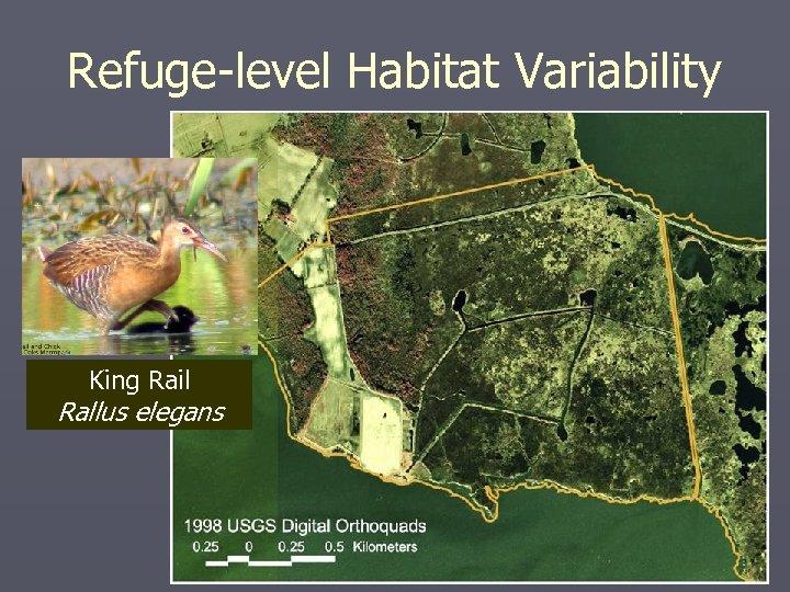 Refuge-level Habitat Variability King Rail Rallus elegans