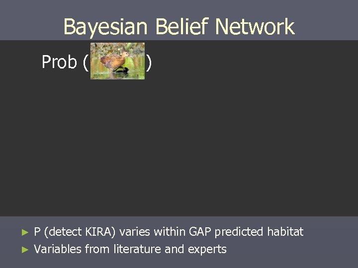 Bayesian Belief Network Prob ( ) P (detect KIRA) varies within GAP predicted habitat