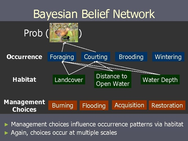 Bayesian Belief Network Prob ( Occurrence Habitat Management Choices ) Foraging Courting Landcover Burning