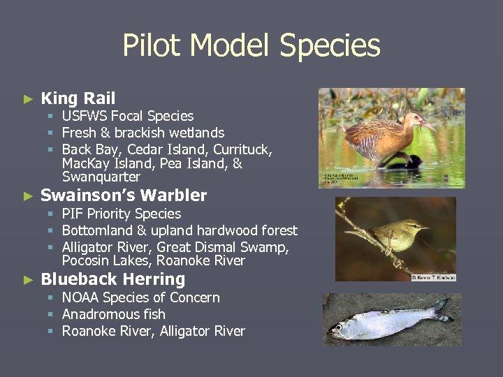 Pilot Model Species ► King Rail ► Swainson's Warbler ► Blueback Herring § USFWS