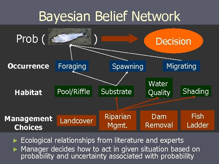 Bayesian Belief Network Prob ( Occurrence Habitat Management Choices ► ► ) Foraging Pool/Riffle