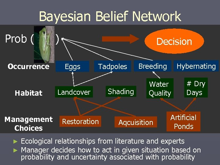 Bayesian Belief Network Prob ( Occurrence Habitat Management Choices ► ► ) Decision Eggs
