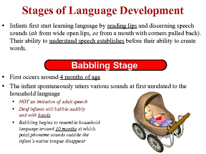 Stages of Language Development • Infants first start learning language by reading lips and