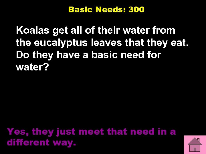 Basic Needs: 300 Koalas get all of their water from the eucalyptus leaves that