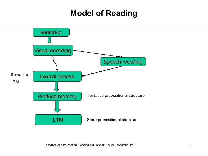 Model of Reading sentence Visual encoding Speech recoding Semantic Lexical access LTM Working memory