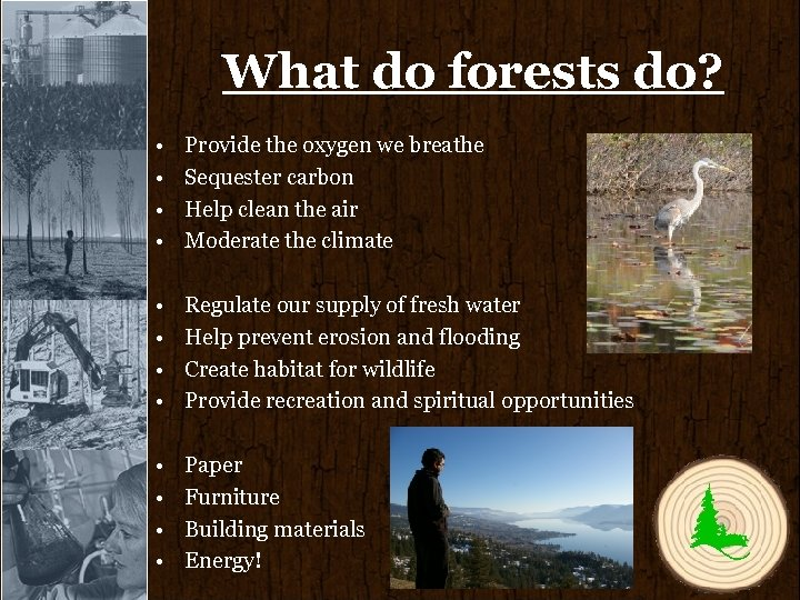 What do forests do? • • • • Provide the oxygen we breathe Sequester