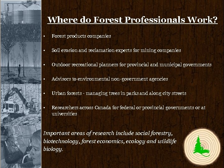 Where do Forest Professionals Work? • Forest products companies • Soil erosion and reclamation