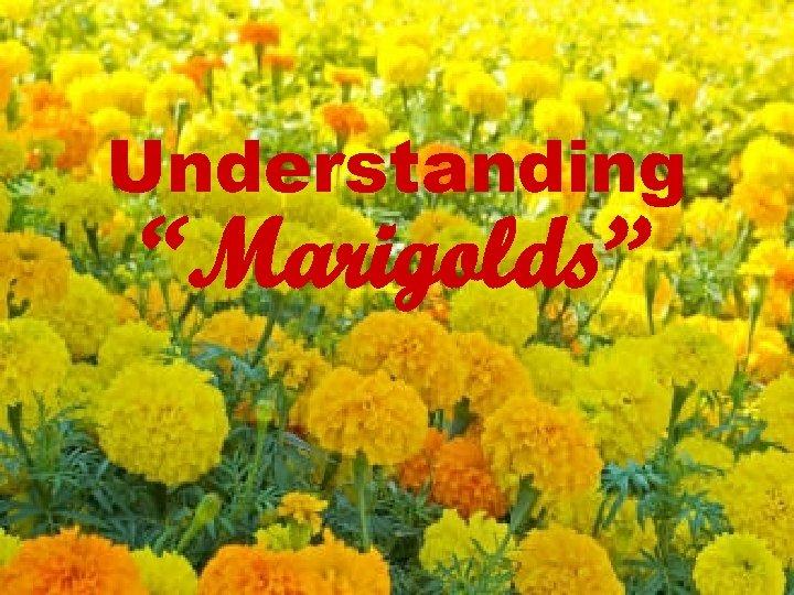 """Understanding """"Marigolds"""""""