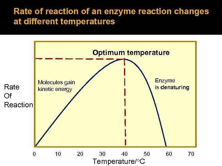 Rate of reaction of an enzyme reaction changes at different temperatures Optimum temperature Rate
