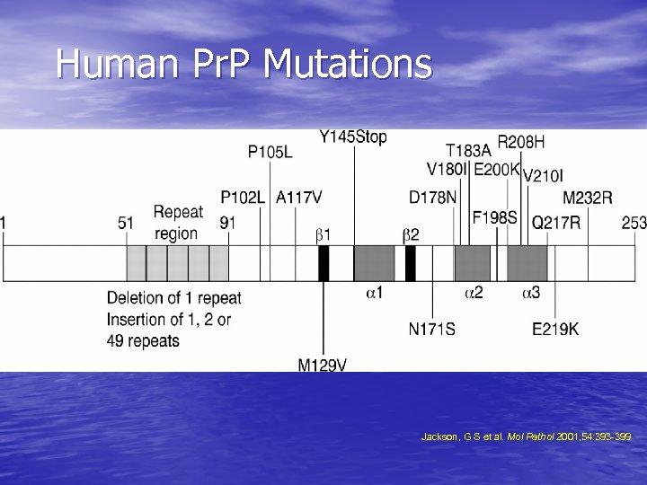 Human Pr. P Mutations Jackson, G S et al. Mol Pathol 2001; 54: 393