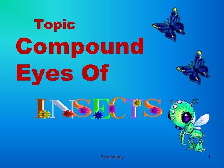 Topic Compound Eyes Of Entomology 1