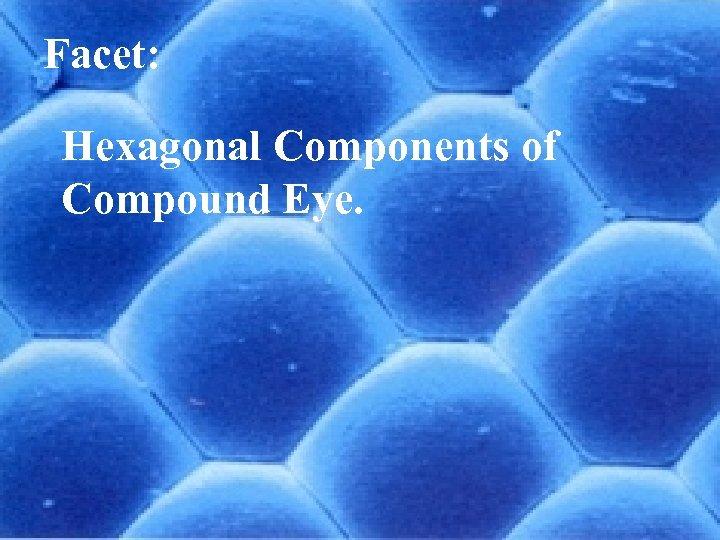 Facet: Hexagonal Components of Compound Eye. Entomology 10