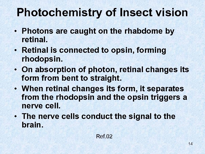 Photochemistry of Insect vision • Photons are caught on the rhabdome by retinal. •