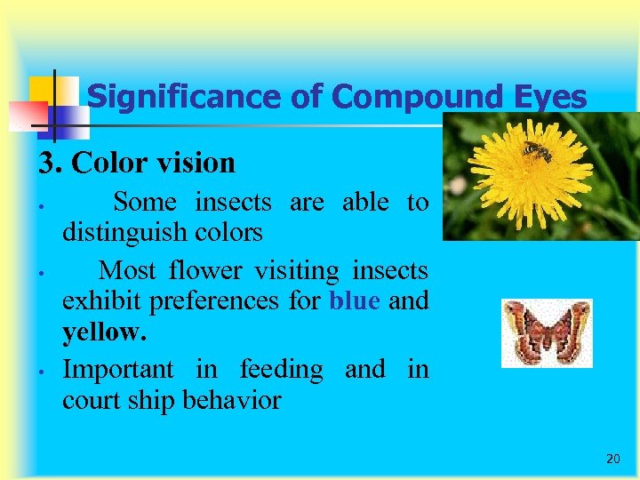 Significance of Compound Eyes 3. Color vision • • • Some insects are able