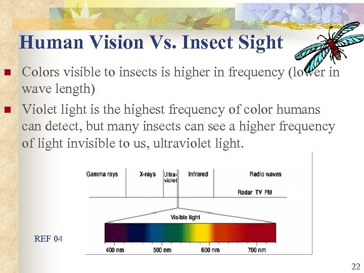 Human Vision Vs. Insect Sight n n Colors visible to insects is higher in