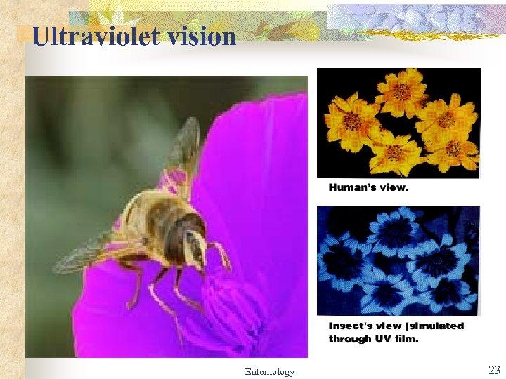 Ultraviolet vision Entomology 23
