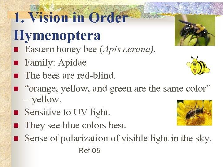 1. Vision in Order Hymenoptera n n n n Eastern honey bee (Apis cerana).