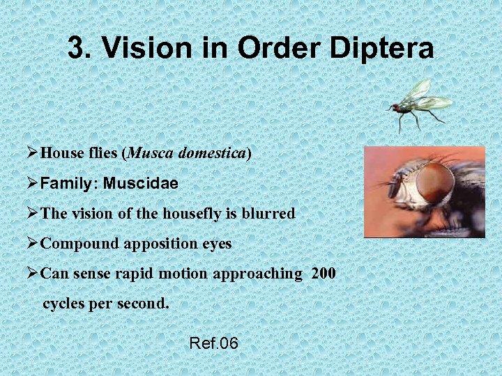 3. Vision in Order Diptera ØHouse flies (Musca domestica) ØFamily: Muscidae ØThe vision of
