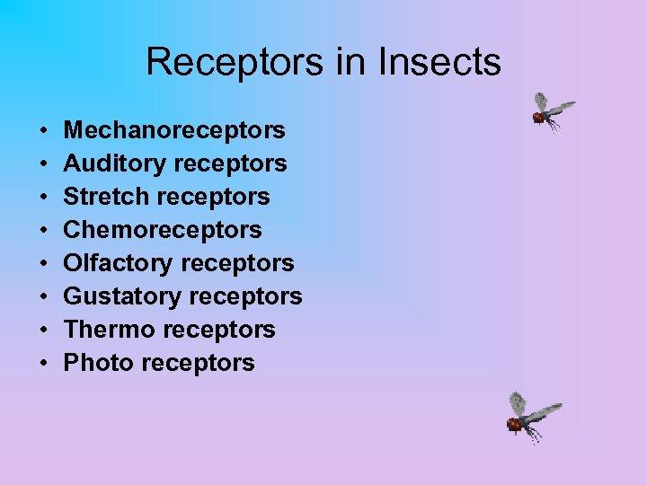 Receptors in Insects • • Mechanoreceptors Auditory receptors Stretch receptors Chemoreceptors Olfactory receptors Gustatory