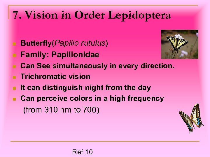 7. Vision in Order Lepidoptera n Butterfly(Papilio rutulus) n Family: Papilionidae n Can See