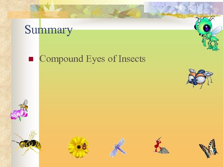 Summary n Compound Eyes of Insects