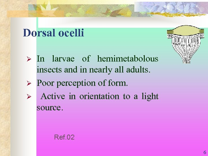 Dorsal ocelli Ø Ø Ø In larvae of hemimetabolous insects and in nearly all