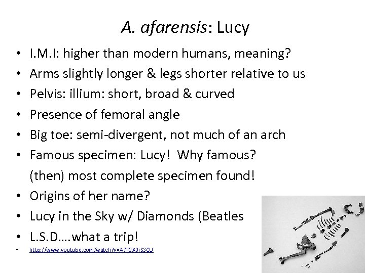 A. afarensis: Lucy I. M. I: higher than modern humans, meaning? Arms slightly longer