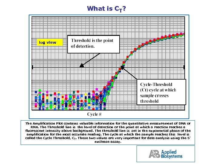 What is CT? log view The Amplification Plot contains valuable information for the quantitative
