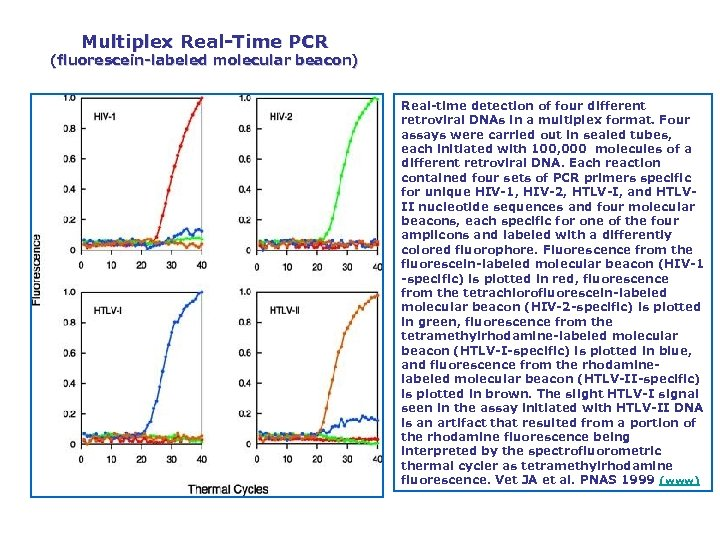 Multiplex Real Time PCR (fluorescein labeled molecular beacon) Real time detection of four different