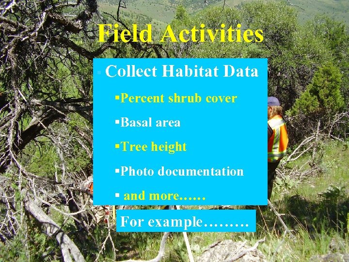 Field Activities § Collect Habitat Data §Percent shrub cover §Basal area §Tree height §Photo