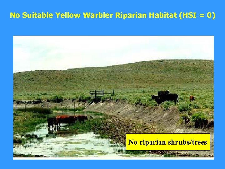 No Suitable Yellow Warbler Riparian Habitat (HSI = 0) No riparian shrubs/trees
