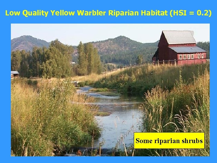 Low Quality Yellow Warbler Riparian Habitat (HSI = 0. 2) Some riparian shrubs