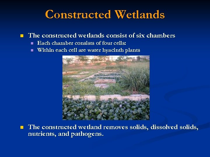 Constructed Wetlands n The constructed wetlands consist of six chambers n n n Each