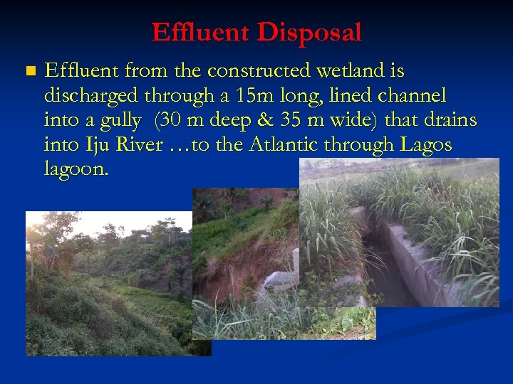 Effluent Disposal n Effluent from the constructed wetland is discharged through a 15 m