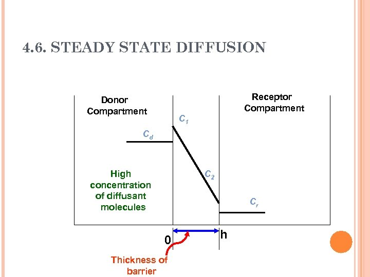 4. 6. STEADY STATE DIFFUSION Receptor Compartment Donor Compartment C 1 Cd High concentration