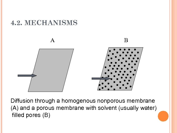 4. 2. MECHANISMS A B Diffusion through a homogenous nonporous membrane (A) and a