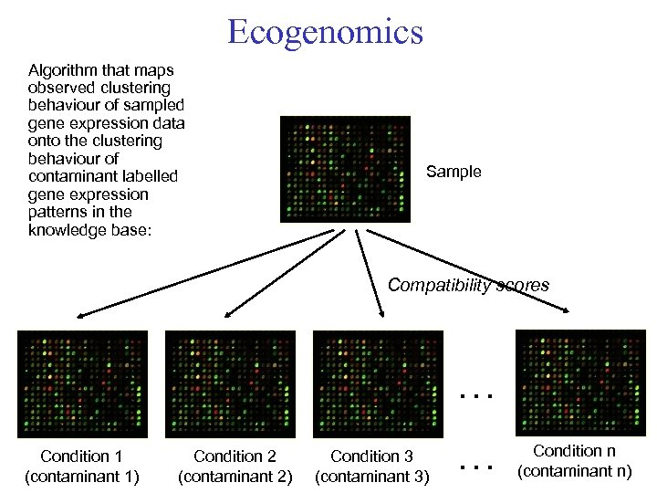 Ecogenomics Algorithm that maps observed clustering behaviour of sampled gene expression data onto the