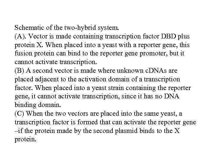 Schematic of the two-hybrid system. (A). Vector is made containing transcription factor DBD