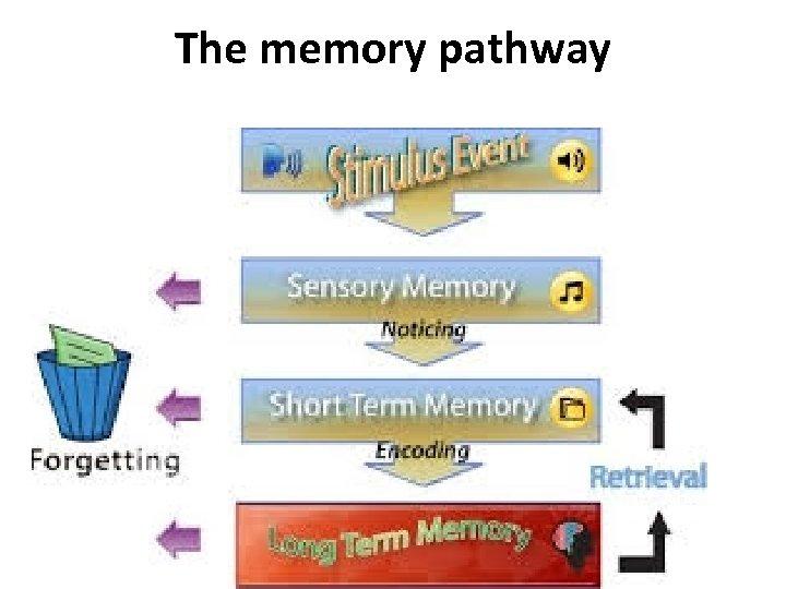 The memory pathway