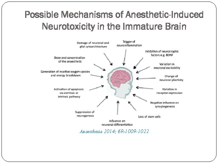 Possible Mechanisms of Anesthetic-Induced Neurotoxicity in the Immature Brain Anaesthesia 2014; 69: 1009 -1022