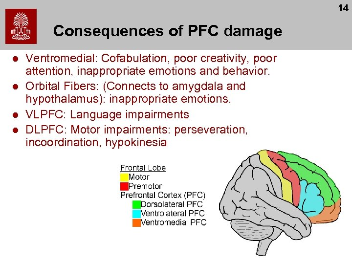 14 Consequences of PFC damage l l Ventromedial: Cofabulation, poor creativity, poor attention, inappropriate